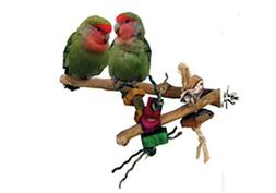 A&E CAGE COMPANY 001090 Java Wood Branch Bird Toy Assorted,