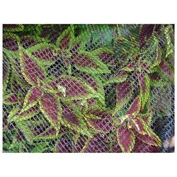 Dewitt BB1414 14' x 14' Bird Barricade Protective Plant Nett