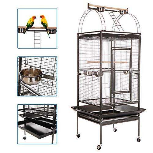 bird cage play parrot