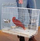 NEW Foldable Parrot Bird Travel Carrier Cage Perch Feed Bowl