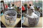PET SHOW Metal Wall Hanging Small Bird Cage Round Decorators