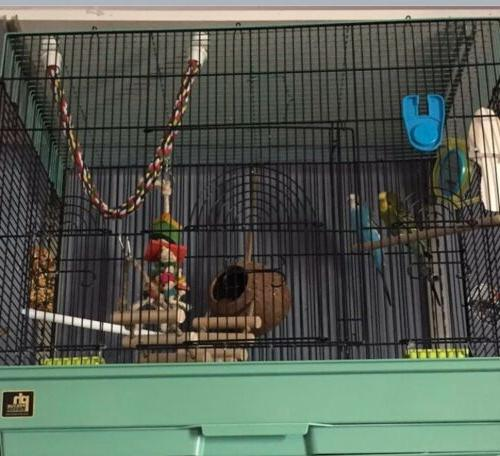 Parakeets For Sale,Comes With A Big Cage And Toys And Treats