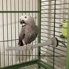 Parrot Perch Bird Perch Thermal Heated Warm Perch
