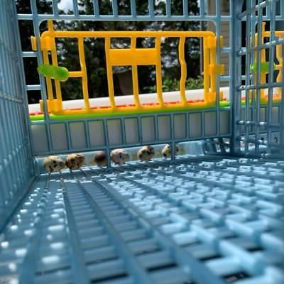 Quail Cage - 2 Layer