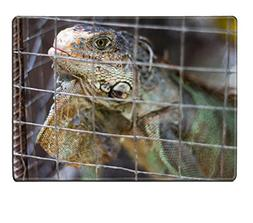 Liili Placemat Natural Rubber Material Iguana in a cage 2949
